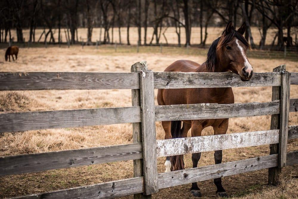 Magnolia Ranch Horses 3